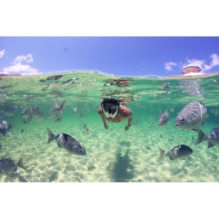 MASKA PEŁNOTWARZOWA OCEAN REEF ARIA CLASSIC